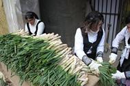Demostración de asar calçots.  Cortando hoja y raíces (esto último no se debería hacer).
