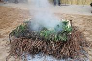Calçots quemándose encima de un buen montón de ramas de sarmiento.