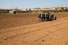 Con el tractor plantando el plantel