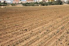 El campo completamente plantado